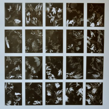 Cécile Ravel - rayogrammes - Improvisations-empreintes