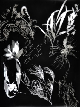 Cécile Ravel - rayogramme - Improvisation empreinte #3