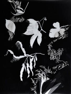 Cécile Ravel - rayogramme - Improvisation empreinte #4