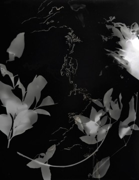 Cécile Ravel - rayogramme - Improvisation empreinte #5