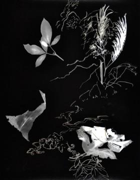 Cécile Ravel - rayogramme - Improvisation empreinte #7