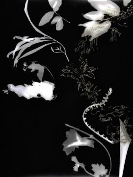 Cécile Ravel - rayogramme - Improvisation empreinte #8
