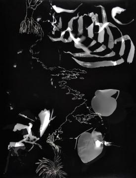 Cécile Ravel - rayogramme - Improvisation empreinte #11