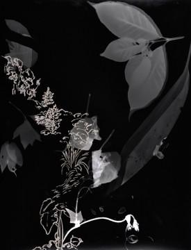 Cécile Ravel - rayogramme - Improvisation empreinte #13