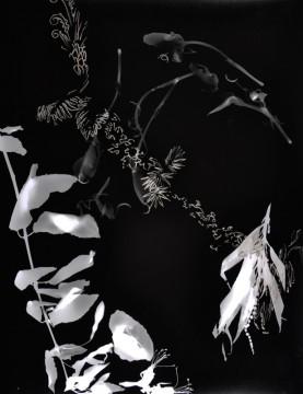 Cécile Ravel - rayogramme - Improvisation empreinte #14