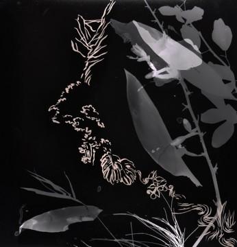 Cécile Ravel - rayogramme - Improvisation empreinte #18