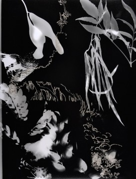Cécile Ravel - rayogramme - Improvisation empreinte #21