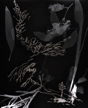 Cécile Ravel - rayogramme - Improvisation empreinte #26